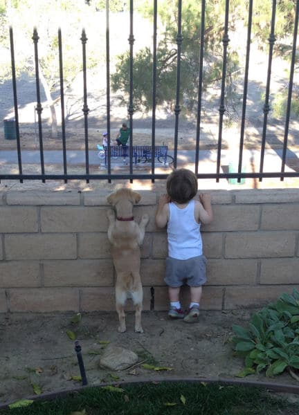 családias kutyák23