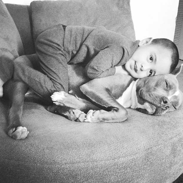 családias kutyák24