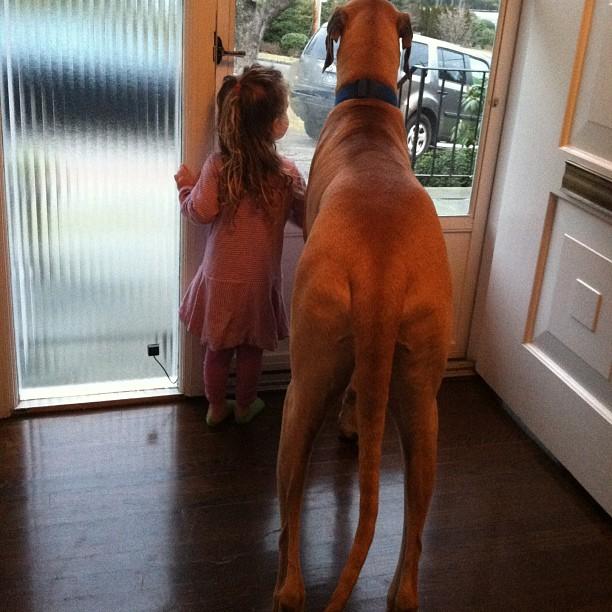 családias kutyák25