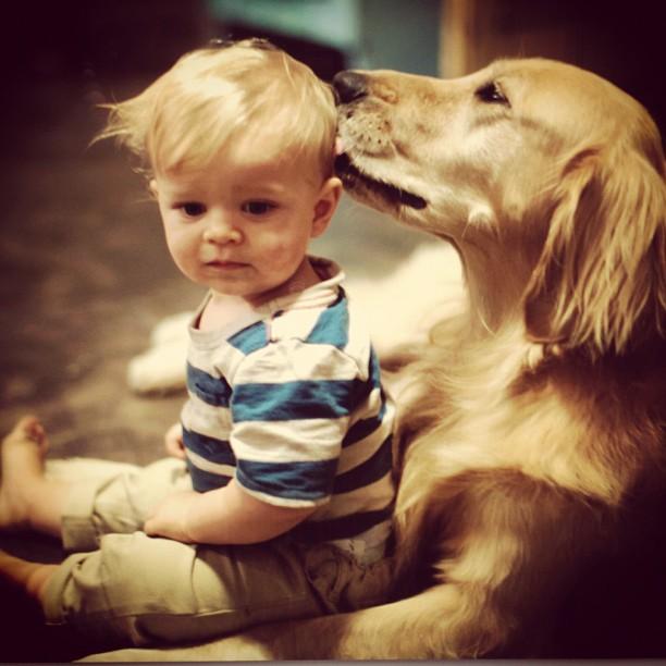 családias kutyák26