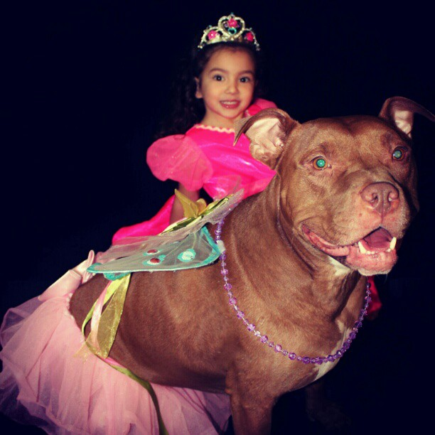 családias kutyák27