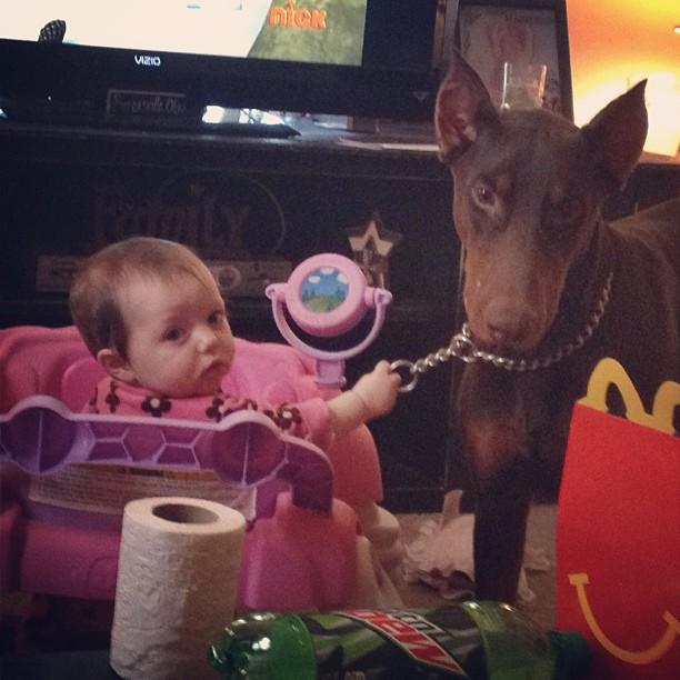 családias kutyák28