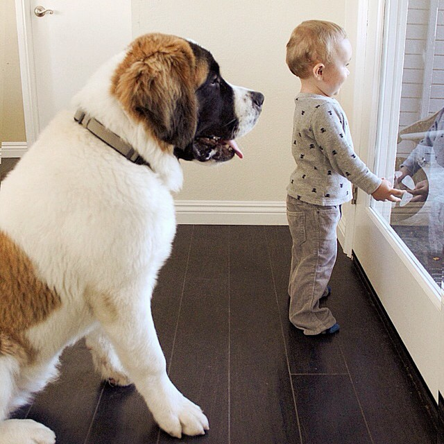 családias kutyák3