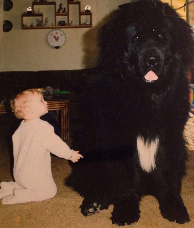 családias kutyák4