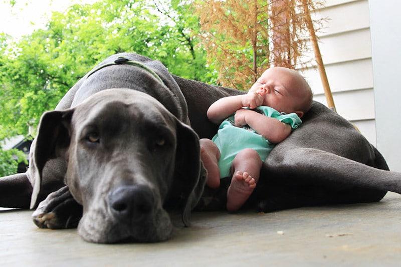 családias kutyák5