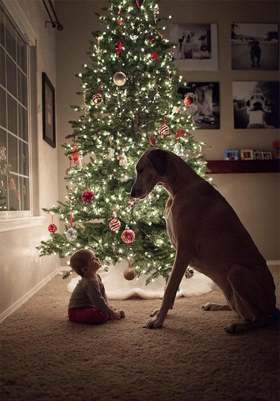 családias kutyák6