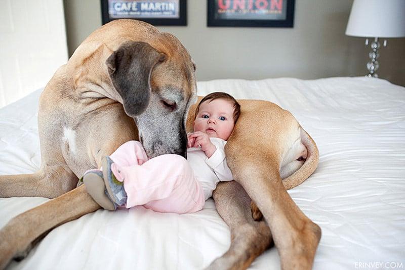 családias kutyák7