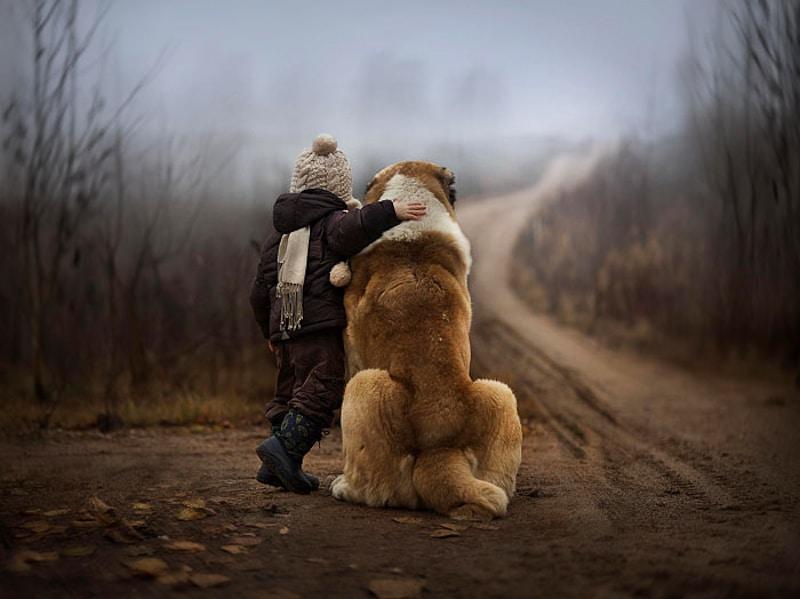 családias kutyák9