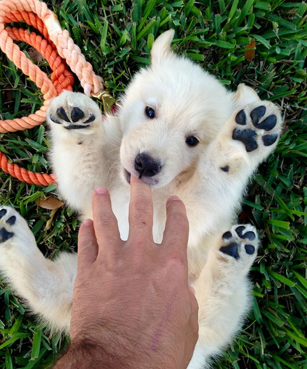 cuki kutyakölykök