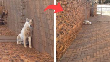 furcsa kutyák