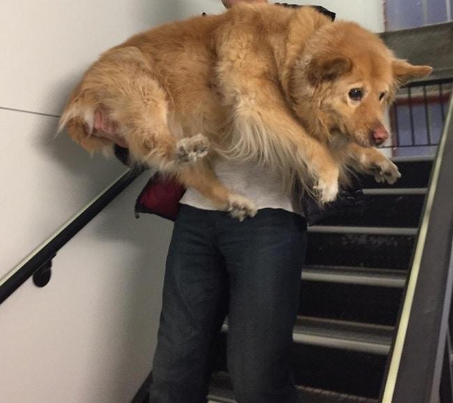 nagy kutyák, akik mindig kölykök maradnak1