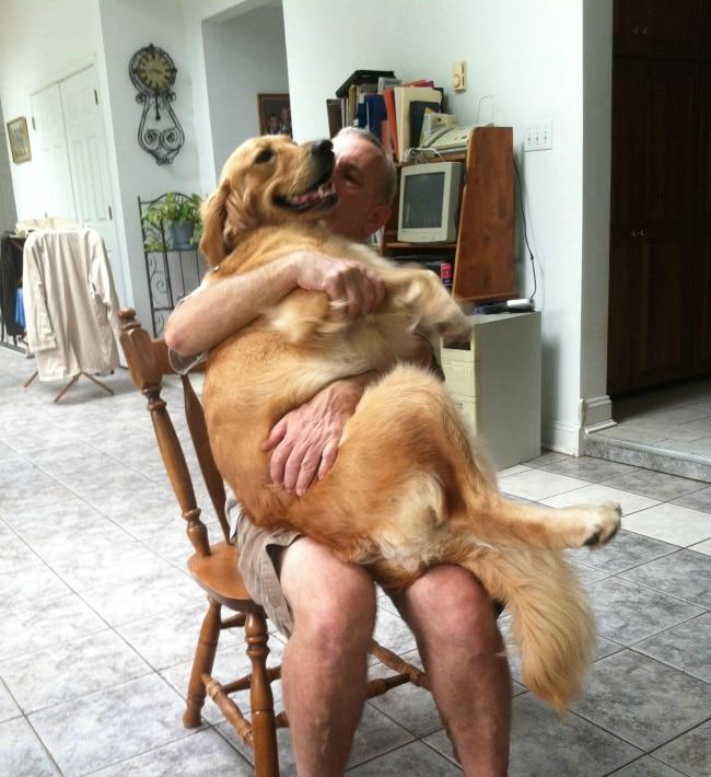 nagy kutyák, akik mindig kölykök maradnak10
