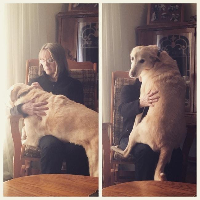 nagy kutyák, akik mindig kölykök maradnak14