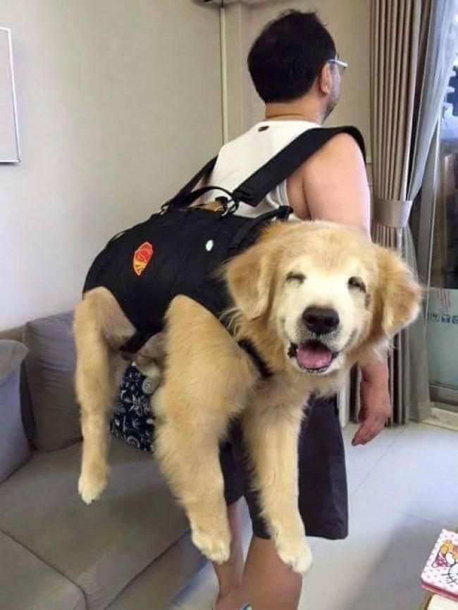 nagy kutyák, akik mindig kölykök maradnak4