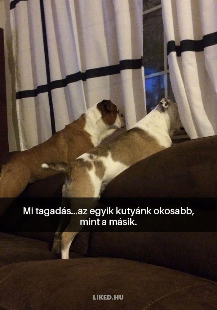 vicces kutyák1