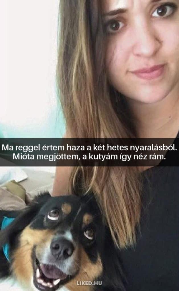 vicces kutyák11