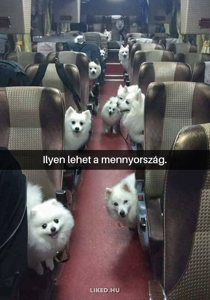 vicces kutyák12