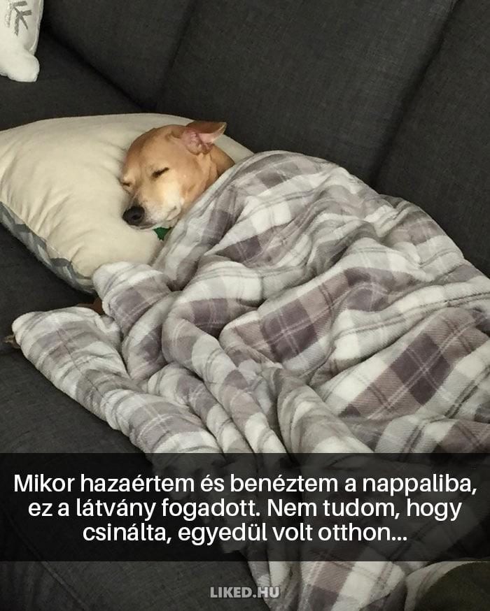 vicces kutyák13