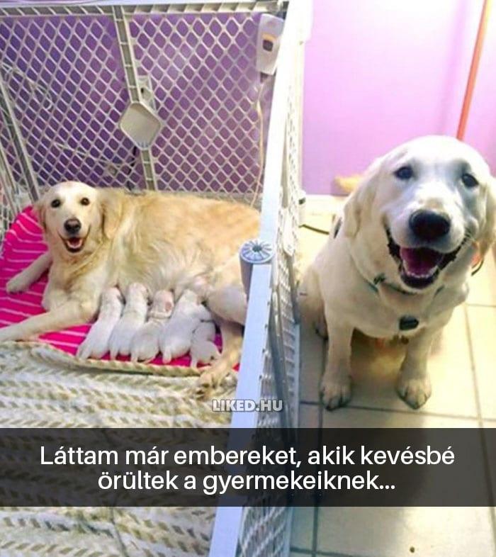vicces kutyák14