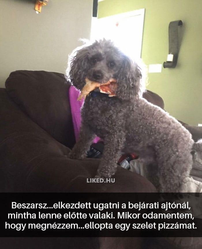 vicces kutyák15