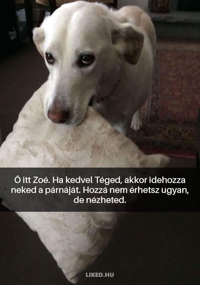 vicces kutyák3