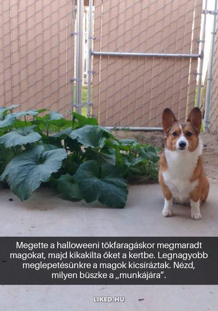 vicces kutyák4