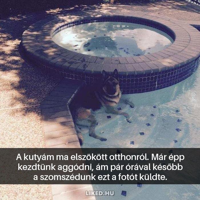 vicces kutyák7