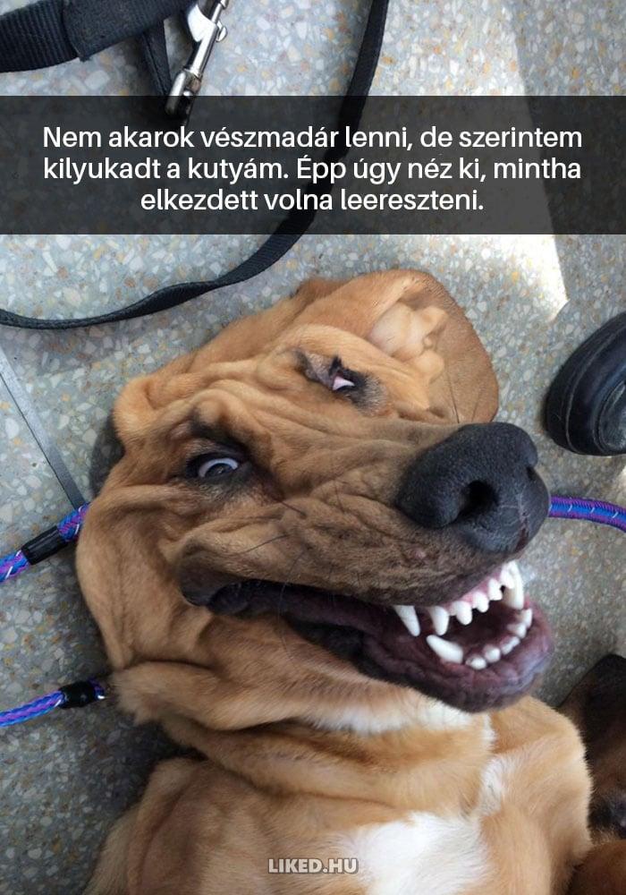 vicces kutyák8