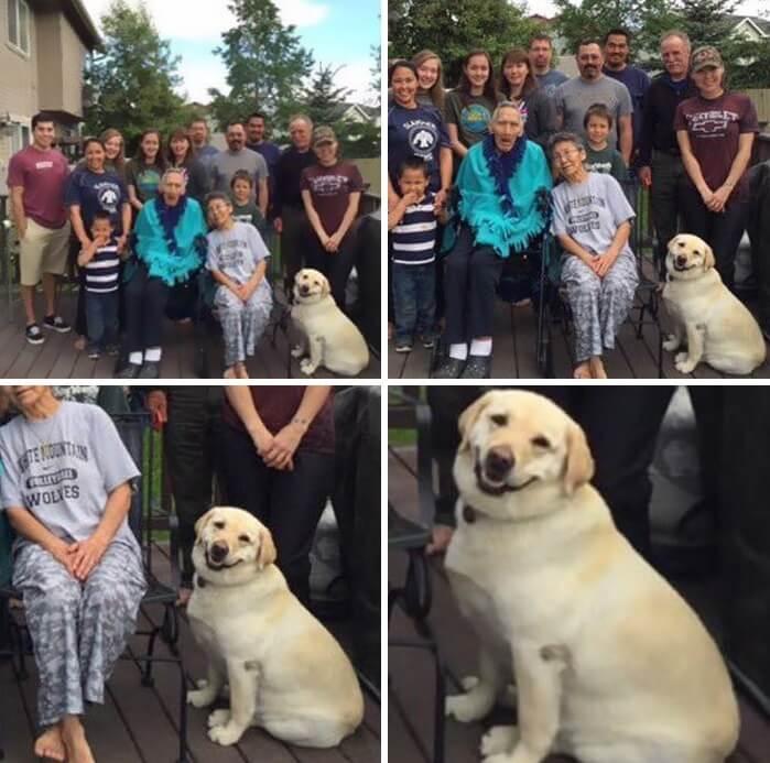 vidám kutyák10