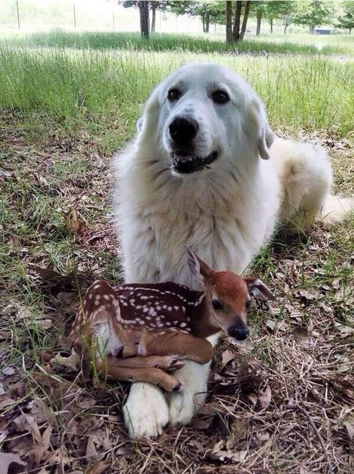 vidám kutyák4