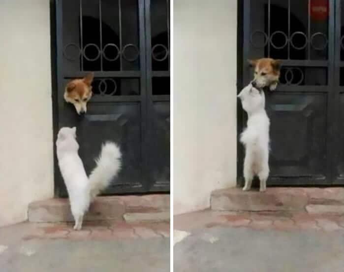 vidám kutyák5