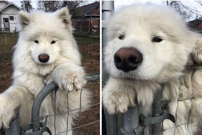 vidám kutyák9