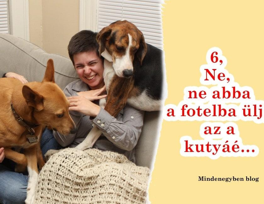10 hasznos tudnivaló, ha egy kutyáshoz mész vendégségbe6