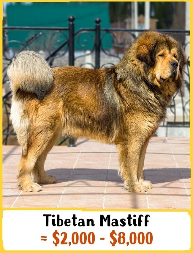 11 fenséges kutyafajta11