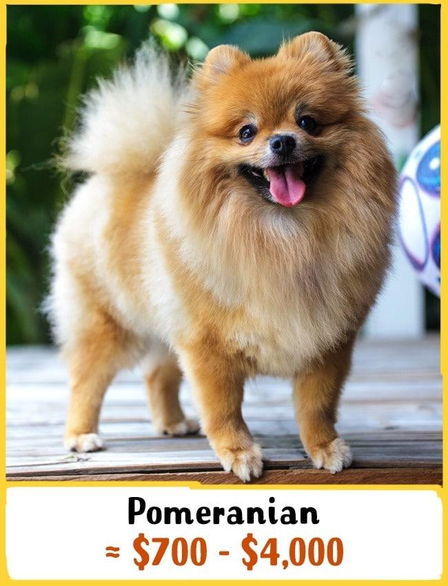 11 fenséges kutyafajta6