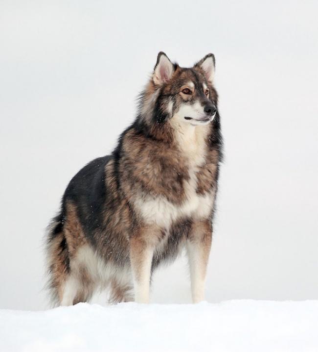 15 csodaszép keverék kutya,1