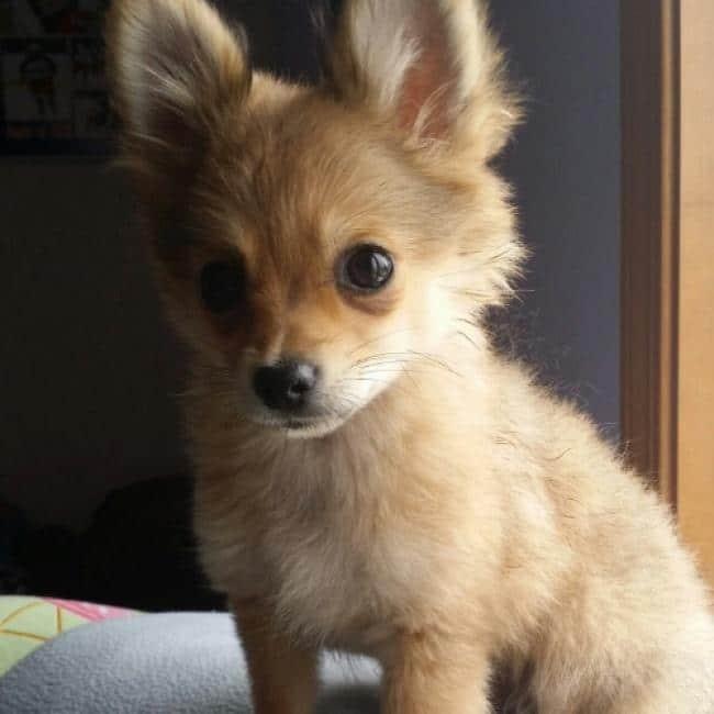 15 csodaszép keverék kutya11