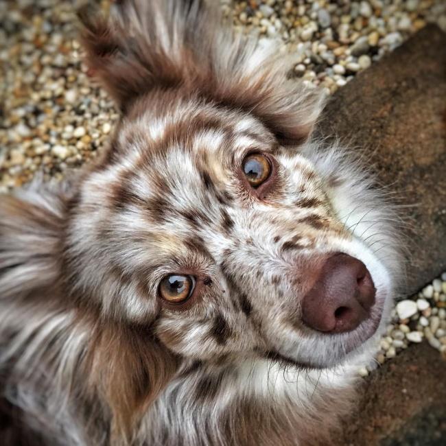 15 csodaszép keverék kutya13
