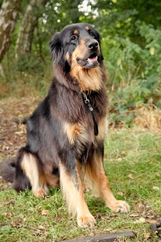 15 csodaszép keverék kutya14