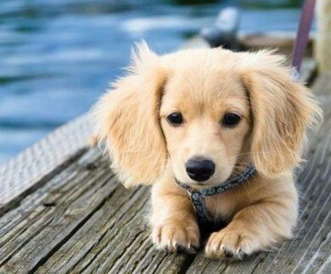 15 csodaszép keverék kutya,2