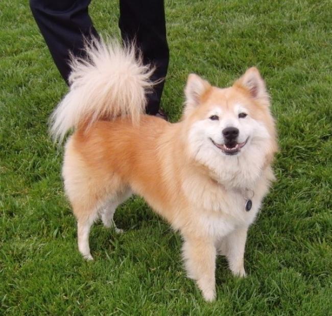 15 csodaszép keverék kutya4