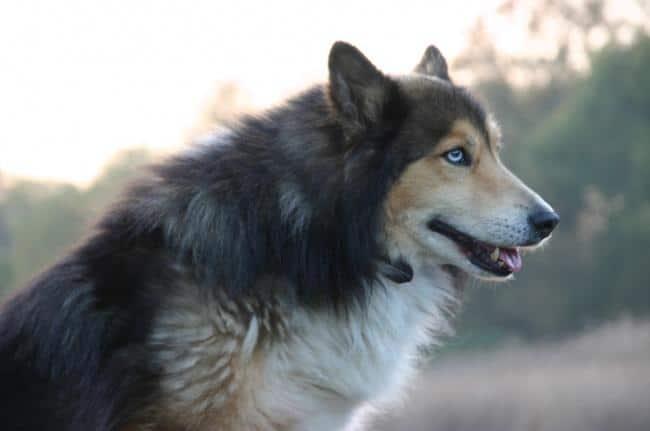 15 csodaszép keverék kutya6