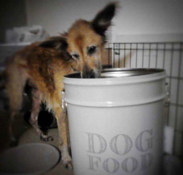 16 éve élt a kutya a menhelyen4