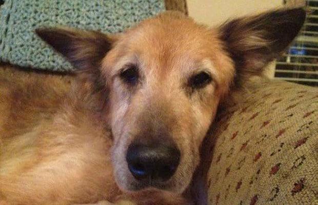 16 éve élt a kutya a menhelyen5