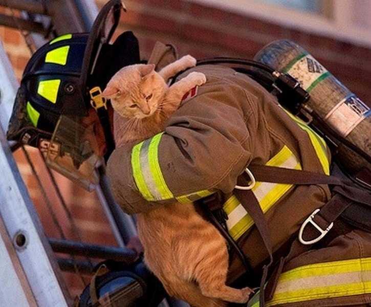 18 kép tűzoltókról akik állatok életét mentik meg 1