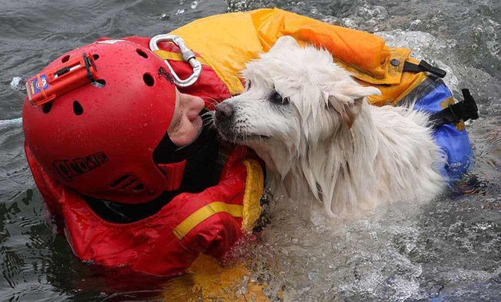 18 kép tűzoltókról akik állatok életét mentik meg 10