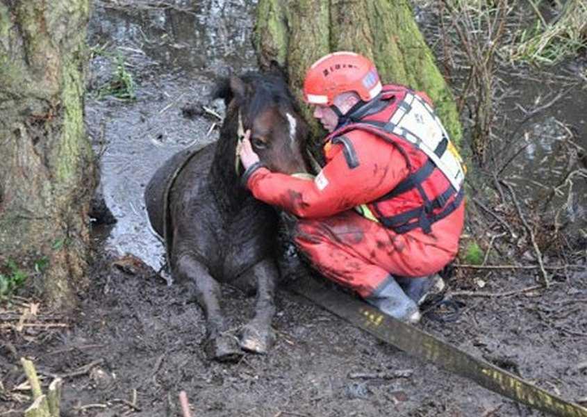 18 kép tűzoltókról akik állatok életét mentik meg 11