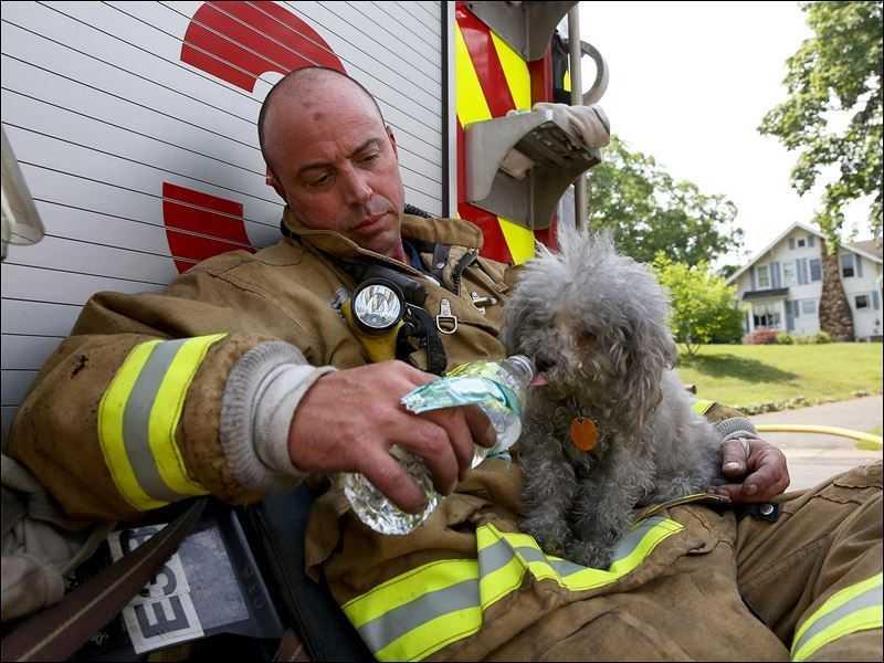 18 kép tűzoltókról akik állatok életét mentik meg 12