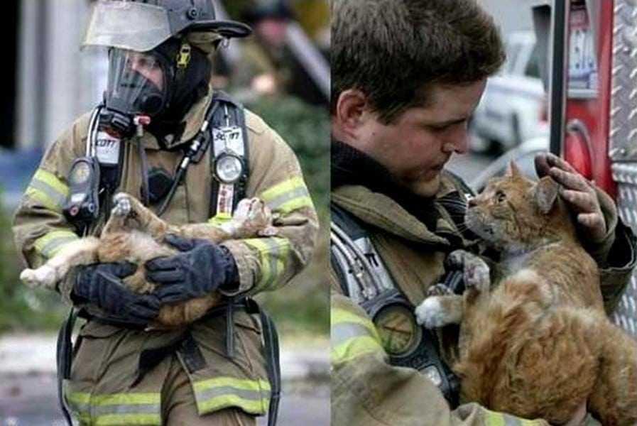 18 kép tűzoltókról akik állatok életét mentik meg 18