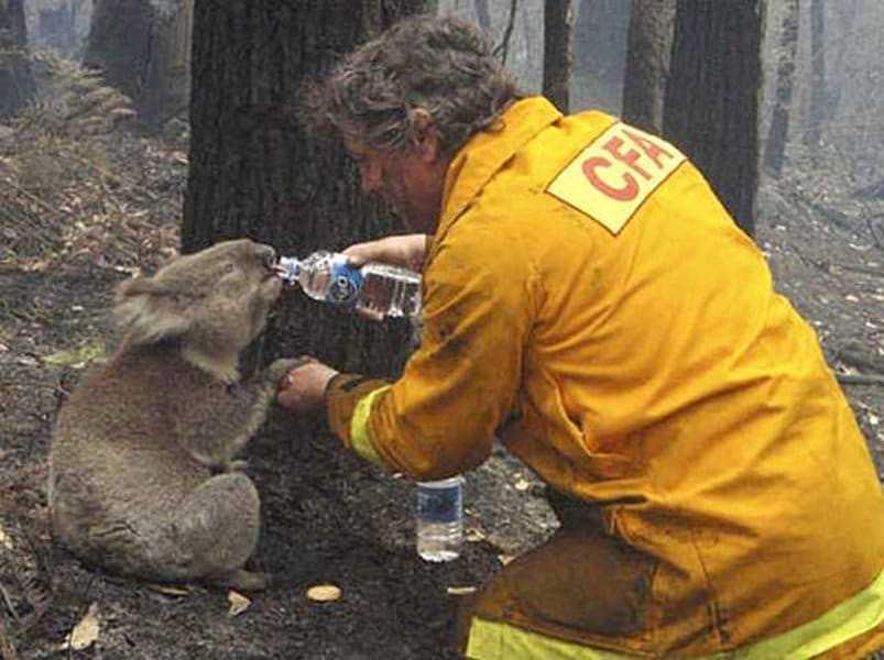 18 kép tűzoltókról akik állatok életét mentik meg 2